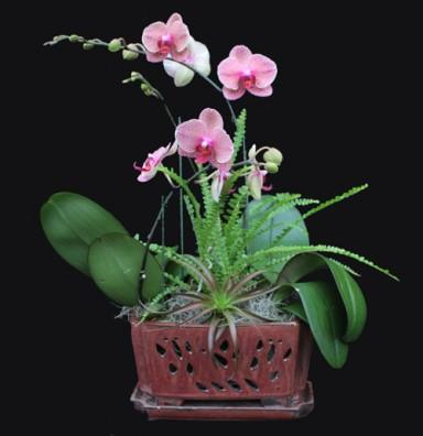 Orchid Arrangement 10_384_396_90