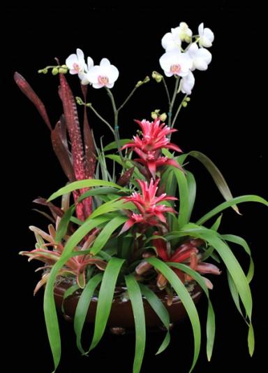 Orchid Arrangement 12_384_533_90