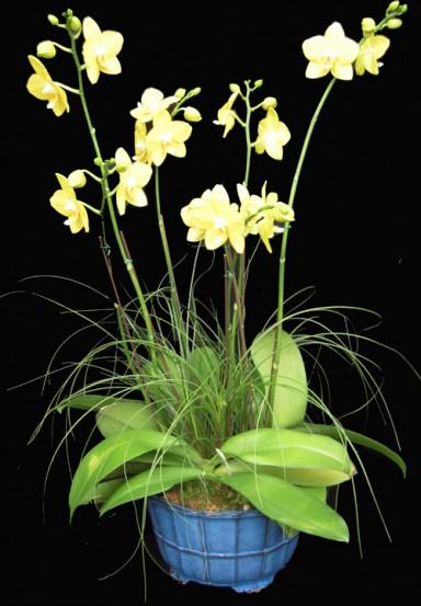 Orchid Arrangement  1_384_553_90