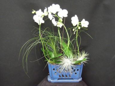 Orchid Arrangement  2_384_288_90