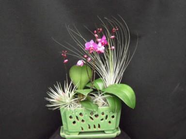 Orchid Arrangement  3_384_288_90