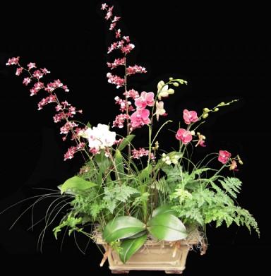 Orchid Arrangement  4_384_391_90