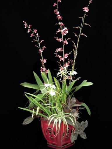 Orchid Arrangement  5_384_511_90