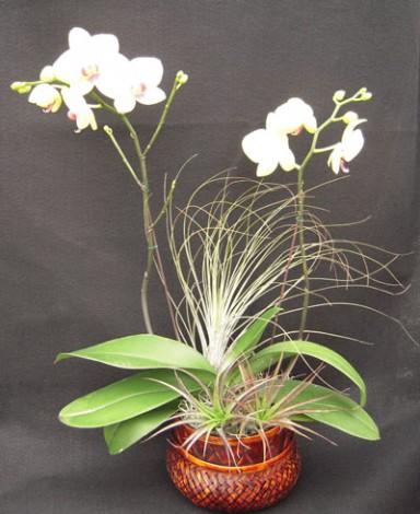 Orchid Arrangement  7_384_470_90