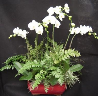 Orchid Arrangement  8_384_379_90