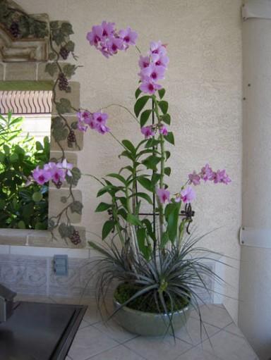 Orchid Arrangement  9_384_511_90